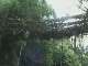 Living bridges of Cherrapunji (الهند)