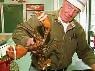 Maine:  United States:  
