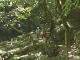 Парк Муро-Акаме-Аояма