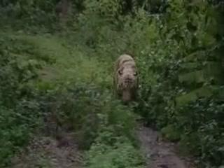 ブヴァネーシュヴァル:  オリッサ州:  インド:      Nandankanan zoo
