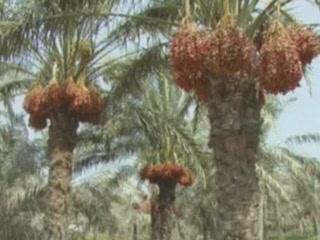 Эль-Фуджайра:  Объединенные Арабские Эмираты:      Природа Эль-Фуджайра