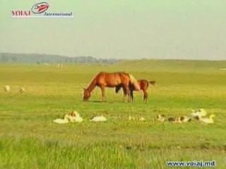 摩尔多瓦:      Nature of Moldova