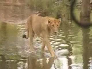 ハイデラバード:  アーンドラ・プラデーシュ州:  インド:      Nehru Zoological Park
