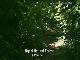 Ngezi Forest