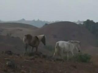 メーガーラヤ州:  インド:      Nongkhnum Island