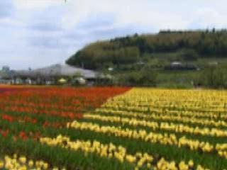 Оита Префектура:  Япония:      Природа Оиты
