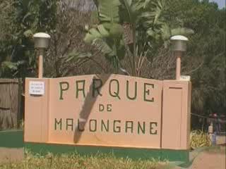 Понта до Оро:  Мозамбик:      Парк Малонгане