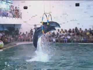 Alushta:  Crimea:  ウクライナ:      Partenit Dolphinarium