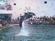 Партенитский дельфинарий