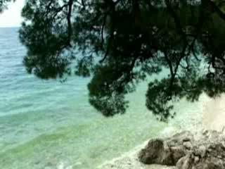 Brela:  Croatia:      Pine beaches