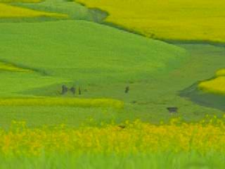 中国:      青海省