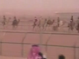 利雅德:  沙特阿拉伯:      Racing camels in Riyadh
