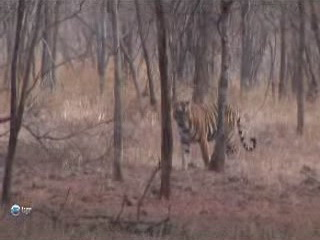 صور Ranthambore National Park ألطَّقص
