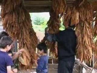 阿扎尔:  格鲁吉亚:      Rural life in Adjara