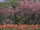 Весна в Саппоро