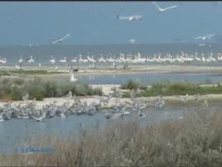 克里米亚:  乌克兰:      Swan Islands, Nature Reserve