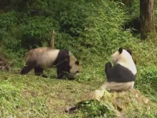 Shaanxi:  China:      Tai Bai Nature Reserve