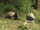 Tai Bai Nature Reserve