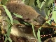 Зоопарк Тасмании