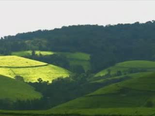 Burundi:      Tea plantations in Burundi