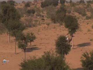 Rajasthan:  India:      Thar Desert in Rajasthan