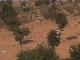 Thar Desert in Rajasthan
