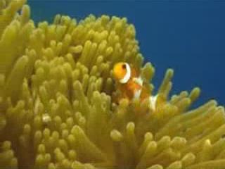 Восточный Тимор:      Подводный мир Тимора