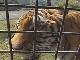 Zoos of Beppu