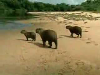ブラジル:      Brazil, nature