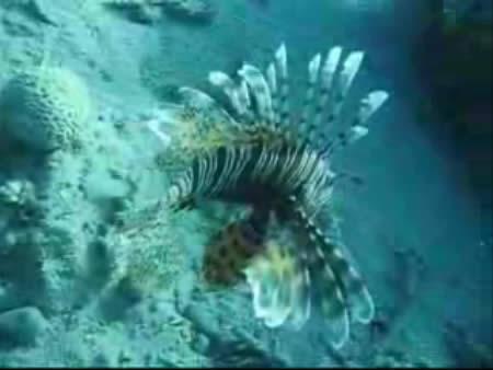 Dahab:  Sharm el-Sheikh:  Sinai:      Dahab, diving