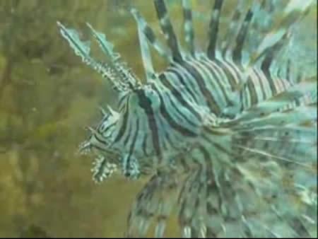 Phi Phi Island:  Krabi:  Thailand:      Phi Phi, diving