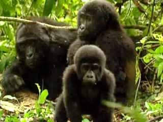 Images Mugahinga Gorilla National Park animals