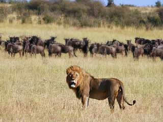 صور Serengeti National Park ألحيوَانَات