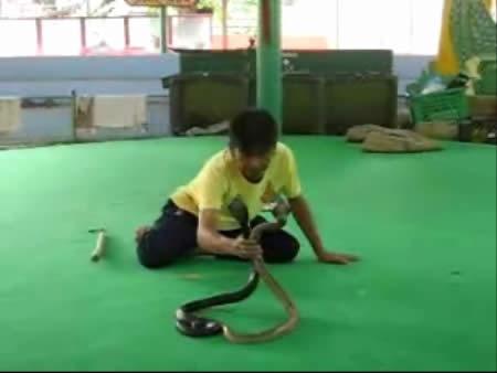 Bangkok:  Thailand:      Snake Farm