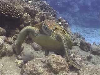 :      Cook Islands