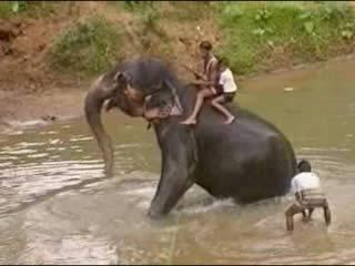 :      Шри-Ланка