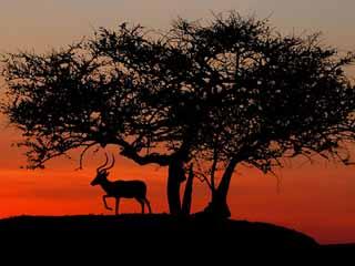 :      Кения