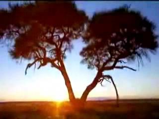 :      ナミビア