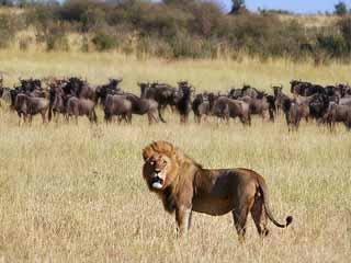 Серенгети Serengeti%20National%20Park