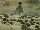 Sheep breeding in  Turkmenistan