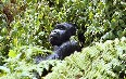 Mugahinga Gorilla National Park Images