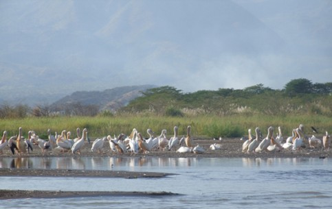 Rift Valley Lakes is one of the most beautiful areas of the country. There are a lot of hippos, fish, birds - herons, ibises, pelicans, flamingos