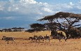 Serengeti National Park Images