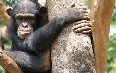 Tacugama Chimpanzee Sanctuary Images