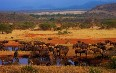 Serengeti National Park صور