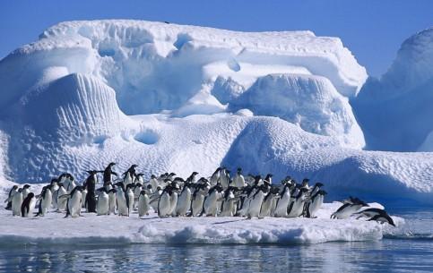 :      南極大陸