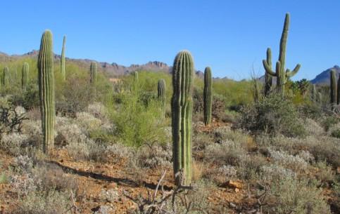 Аризона:  Соединённые Штаты Америки:      Музей пустыни Сонора