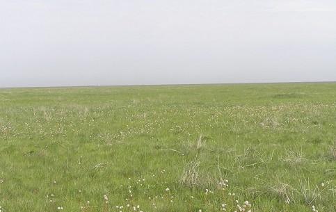 ヘルソン:  ウクライナ:      Askania-Nova