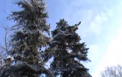 ハルキウ:  ウクライナ:      Askania-Nova in Winter