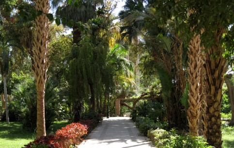 Aswan:  エジプト:      Kitchener's Island and Aswan Botanic Garden